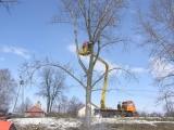 Podest ruchomy samojezdny P184H (podnośnik koszowy – zwyżka) przycinanie drzew - Czekanów