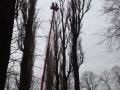 Wycinka drzew - Bytom